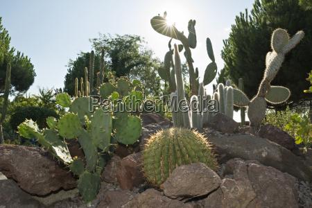germany constance cactuses on mainau island