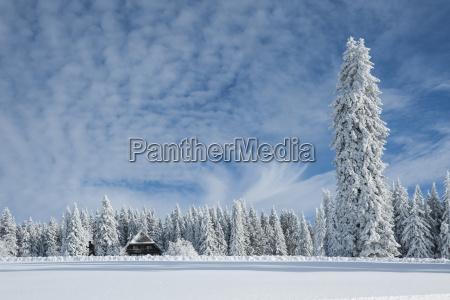 germany baden wuerttemberg black forest feldberg