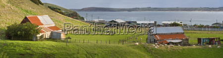 nueva zelanda chatham island waitangi granja