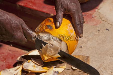 sri lanka man opening coconut close