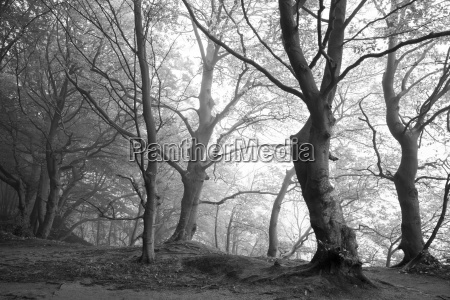germany mecklenburg western pomerania ruegen jasmund