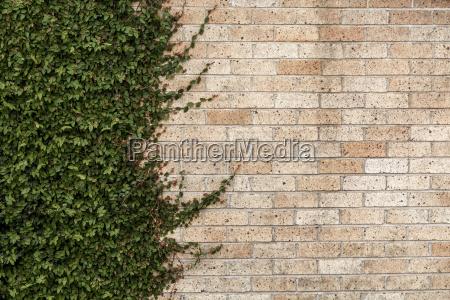 new zealand ngatea facade greening partial