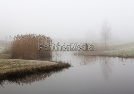 austria view of trees with reed