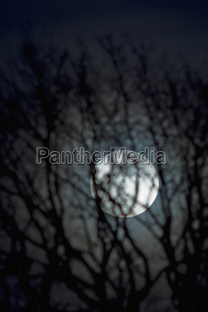 germany moon rise with bare tree