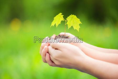 erwachsene und kind halten kleine gruene