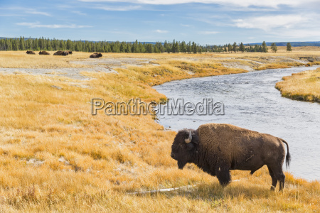 usa wyoming yellowstone national park american
