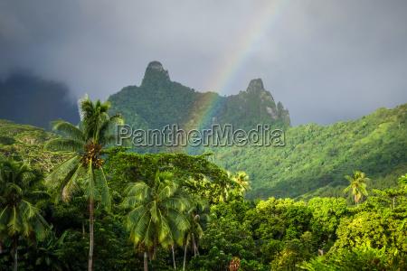 regenbogen auf moorea inseldschungel und gebirgslandschaft