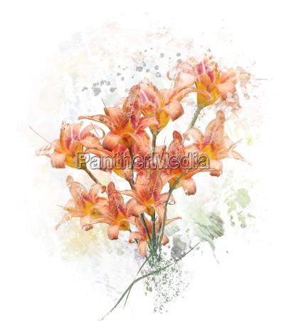 orange lily blumen aquarell