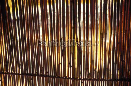 bambuszaun suedafrika