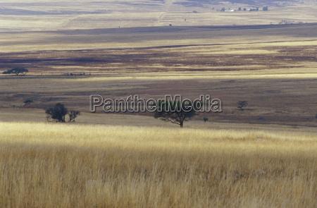 baum savanne horizontal outdoor freiluft freiluftaktivitaet