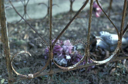 mahnmal gedenkstaette tod blume pflanze gewaechs