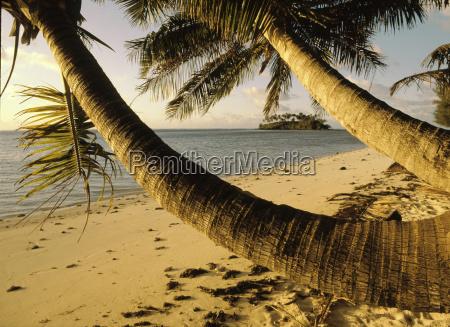 blau blatt baumblatt wolke strand horizontal