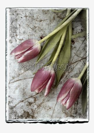 blatt baumblatt blume pflanze gewaechs frische