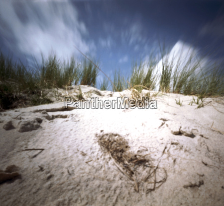 deutschland nordsee amrum duene mit murmelgras