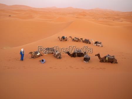 nordafrika marokko merzouga tuaregfuehrer mit kamelen