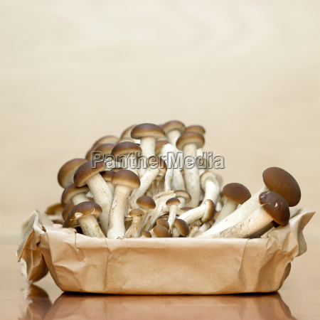 mushrooms in paper box close up