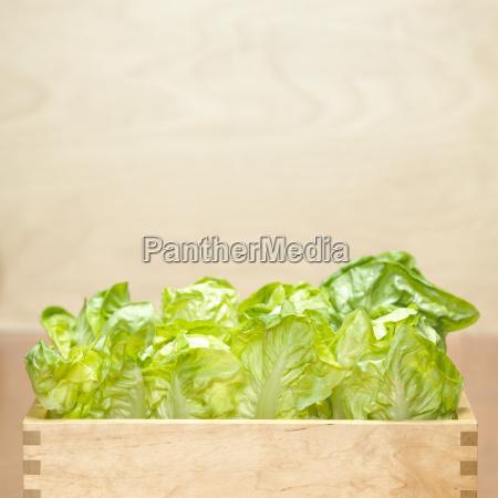 romana salat in holzkiste nahaufnahme