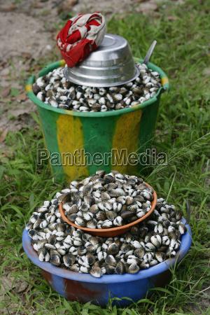 africa guinea bissau clam shell in