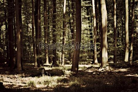 germany pforzheim tree trunks in forest