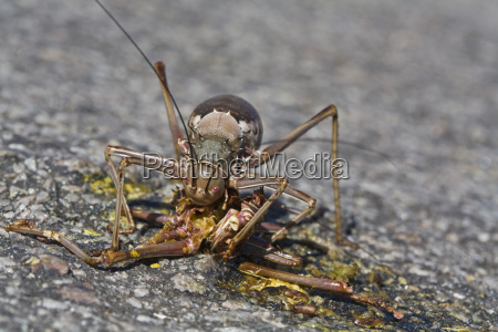 tier insekt afrika namibia portrait portraet