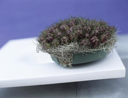 nigella damascena in flowerpot