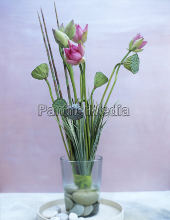 lotus flower and lotus pod in