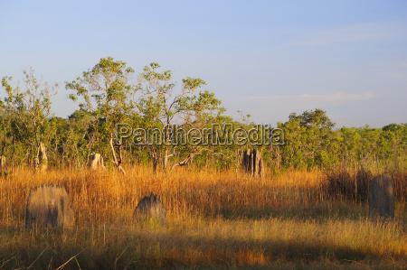 australia view of litchfield national park