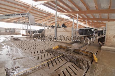 tier landwirtschaft ackerbau stehend fotografie photo