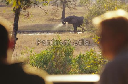 trinken trinkend trinkt elefant horizontal outdoor