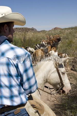 usa texas dallas cowboy and texas