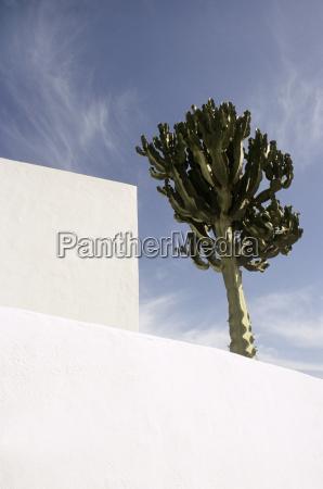 spain lanzarote white building and cactus