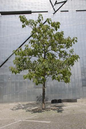 germany berlin jewish museum tree in
