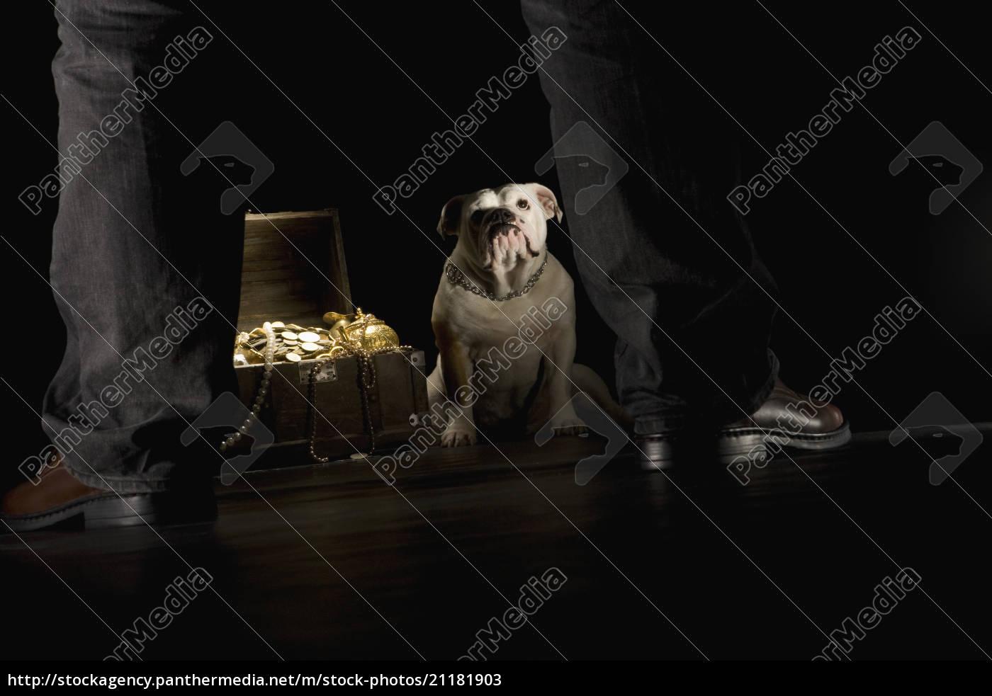 bulldogge, sitzt, nächste, schatztruhe, mann, im, vordergrund - 21181903