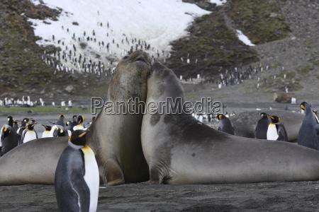 tier vogel antarktis schnupfen erkaeltung katar