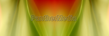blume pflanze gewaechs symmetrie tulpe gespiegelt