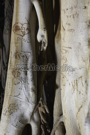 israel text carvings on tree trunk