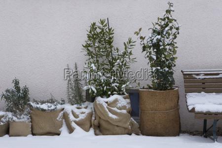 kalter wetterschutz fuer pflanzen