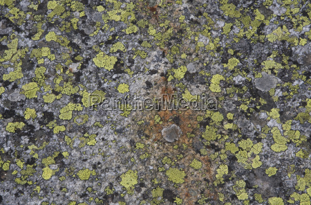 austria wildgerlostal lichen on rock elevated