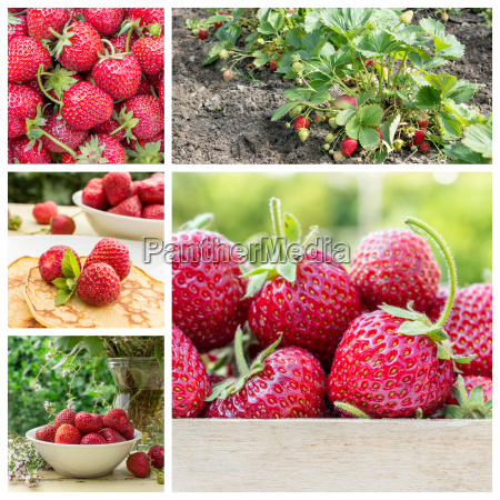 collage with fresh ripe strawberries