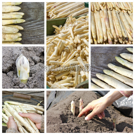 collage with white asparagus