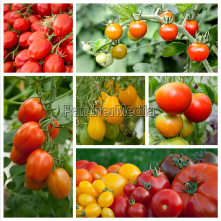 collage with tomatoes and tomato