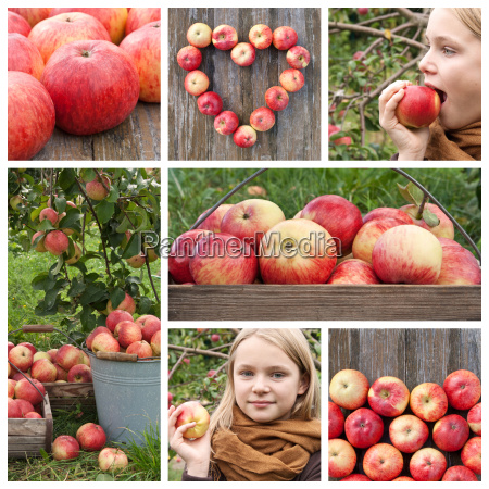 collage with apples and apple tree