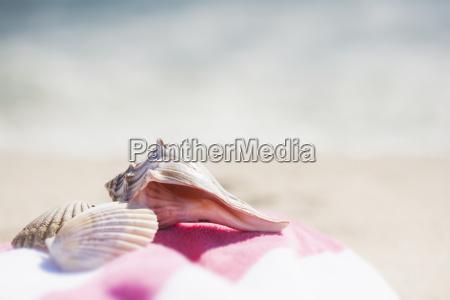 close up of sea shells and