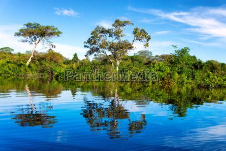 amazonas regenwald reflexion