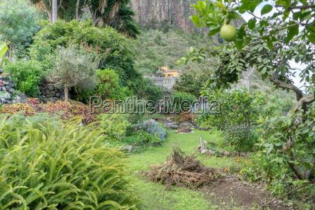 tropical garden in tenerife
