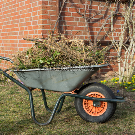 wheelbarrow with branches and leaves in