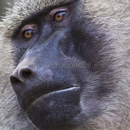 pavillon tarangire nationalpark wildlife reserve in