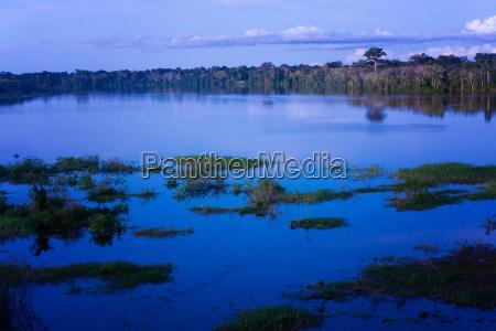 amazon rain forest blue hour