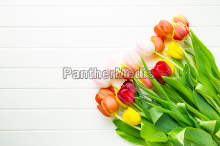buendel tulpen blumen