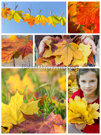 collage with colorful autumn leaves
